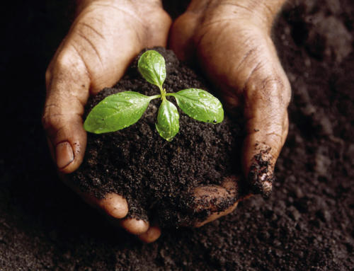 HOW TO BE A SOIL DOCTOR